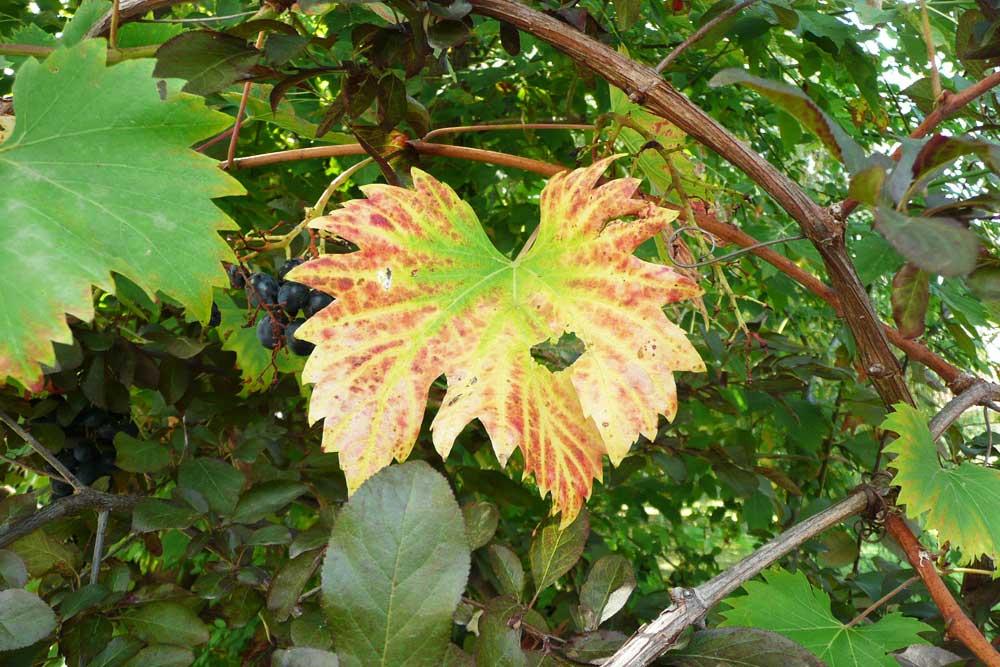 Ősz / der Herbst